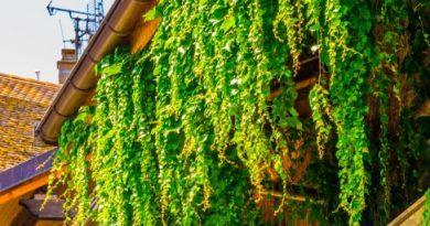 Unsere Dächer begrünen